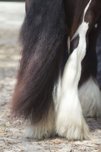 Tail and feathers