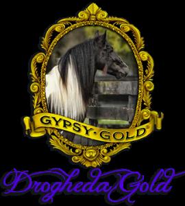 Drogheda Gold